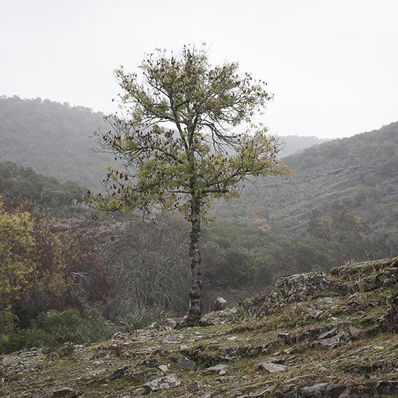eduardo marco miranda-La Naturaleza del Paisaje - Montes de Toledo